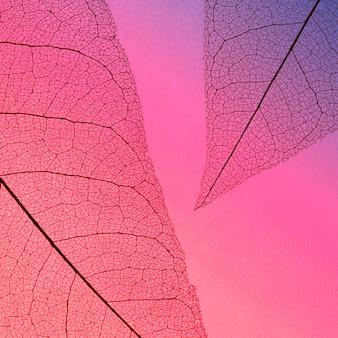 Vista superior da textura de folhas transparentes com matiz colorido