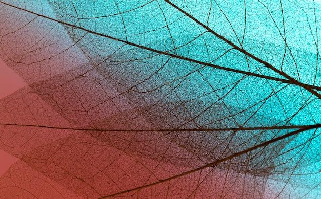 Vista superior da textura de folhas transparentes
