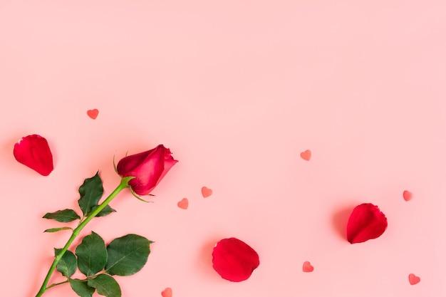 Vista superior da única bela rosa vermelha e pétalas em fundo rosa pastel.
