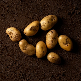 Vista superior das batatas no solo