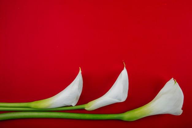 Vista superior das flores de lírios de calla de cor branca, isoladas no fundo vermelho, com espaço de cópia