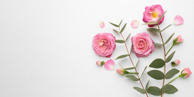 Vista superior das flores rosas com espaço de cópia