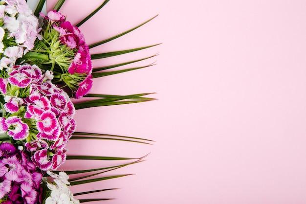 Vista superior das flores roxas e brancas doces william ou cravo turco isoladas na folha de palmeira em fundo rosa com espaço de cópia