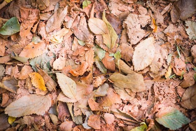 Vista superior das folhas caídas da árvore do outono.