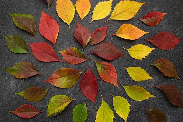 Vista superior das folhas concêntricas de outono