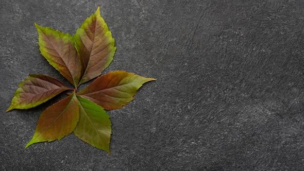 Vista superior das folhas da planta com espaço de cópia