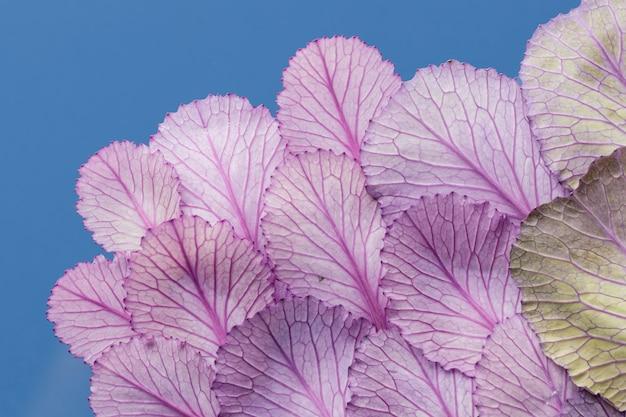 Vista superior das folhas da planta