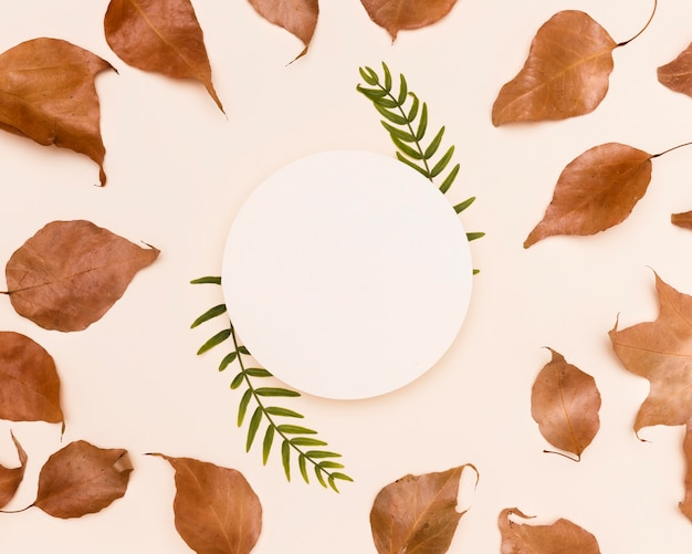 Vista superior das folhas de outono com círculo de papel