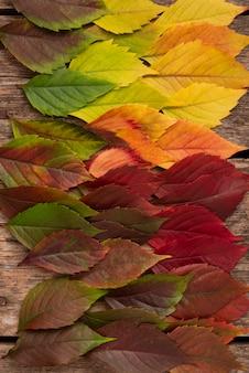 Vista superior das folhas de outono lindamente coloridas