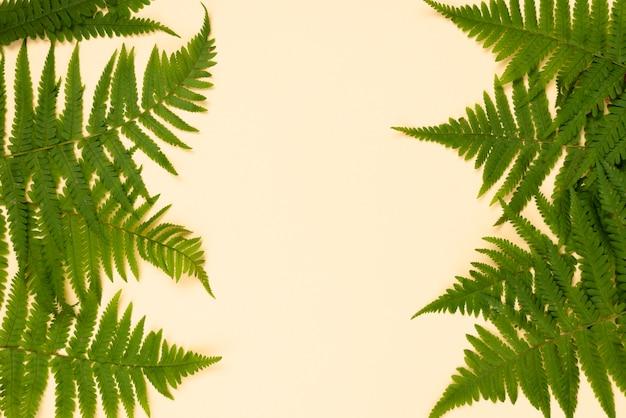 Vista superior das folhas de samambaia com espaço de cópia