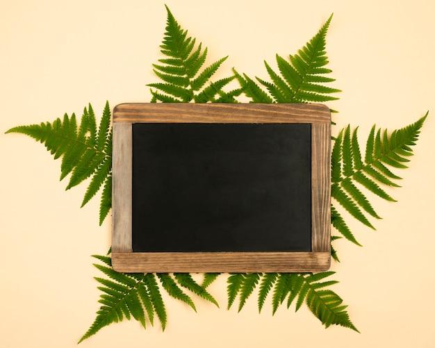 Vista superior das folhas de samambaia com quadro-negro