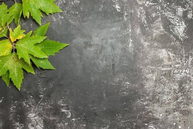 Vista superior das folhas verdes na superfície cinza