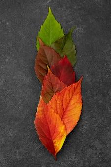 Vista superior das lindas folhas de outono
