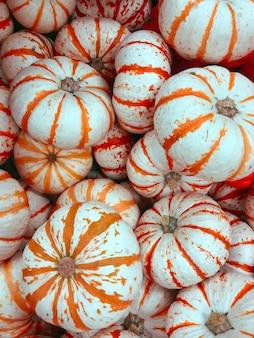 Vista superior das mini abóboras brancas e laranja decoração ao ar livre da casa ou do jardim decoração de halloween ou de ação de graças