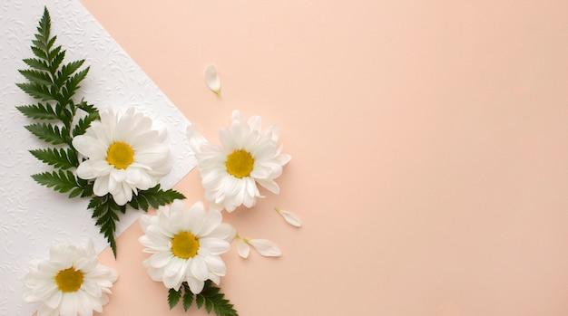 Vista superior das pétalas de flores na folha de papel