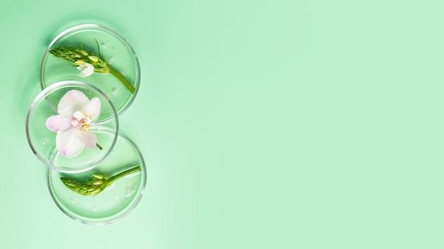 Vista superior das placas de petri com gel transparente dentro. orquídea fresca e folhagem nela. conceito de pesquisa e preparação de cosméticos. background de hortelã, banner grande.