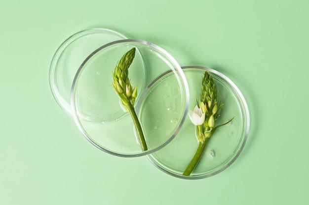 Vista superior das placas de petri com gel transparente no interior. folhagem verde fresca nela. conceito da pesquisa e preparação do cosmético. fundo de hortelã.