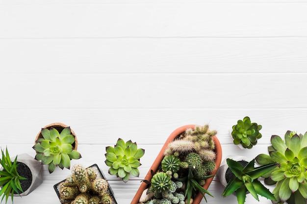 Vista superior das plantas em uma superfície de madeira