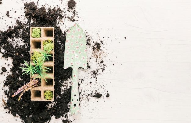 Vista superior das plantas na bandeja de turfa e showel de jardinagem no solo sobre fundo de madeira