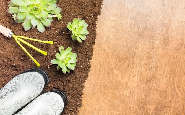 Vista superior das plantas no chão