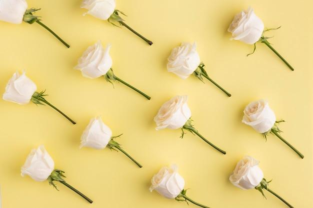 Vista superior das rosas em flor