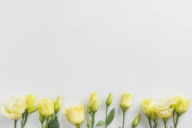 Vista superior, de, amarelo floresce