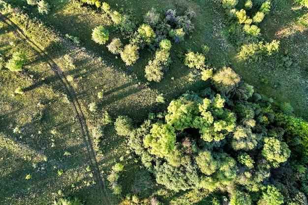 Vista superior de árvores e uma estrada na região de kursk, na rússia