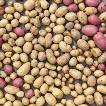 Vista superior de batatas orgânicas de diferentes formas, cores e tamanhos