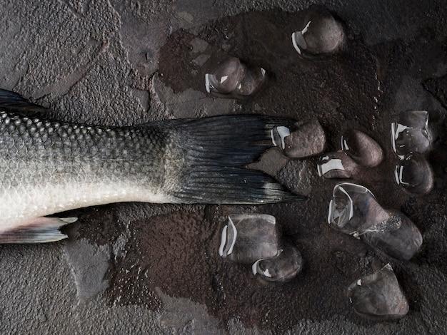 Vista superior de cauda de peixe com cubos de gelo