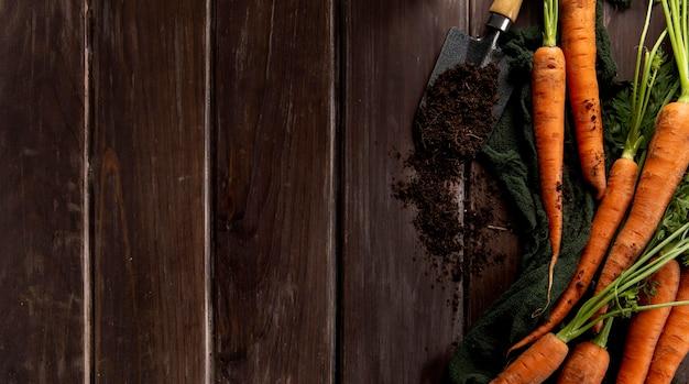 Vista superior de cenouras com ferramenta de jardim e cópia espaço