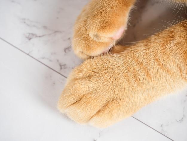 Vista superior de cor laranja com pata de gato fofo no espaço de cópia em mármore branco