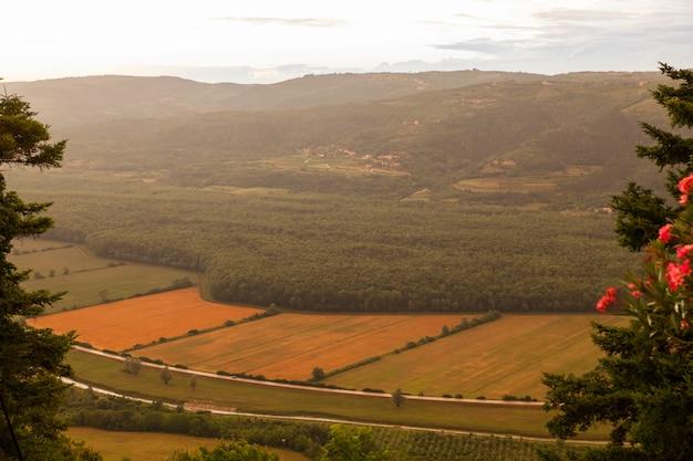 Vista superior, de, cultivado, campo