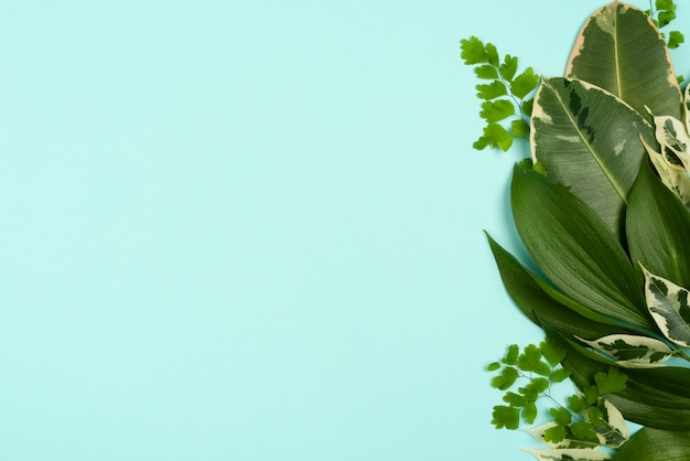 Vista superior de diferentes folhas de plantas com espaço de cópia