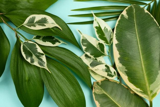 Vista superior de diferentes folhas de plantas