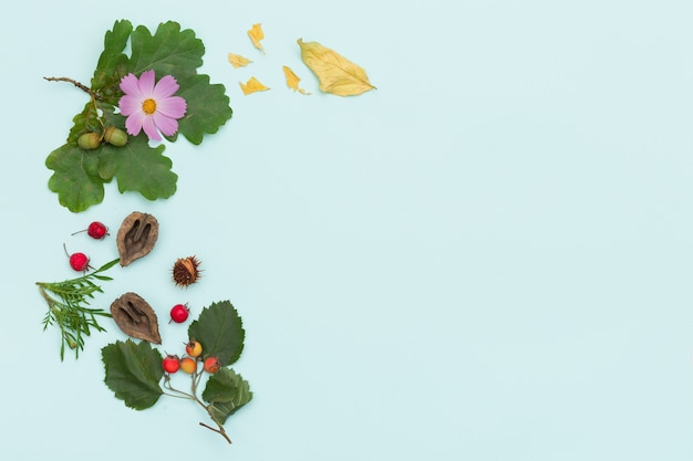 Vista superior de diferentes plantas, nozes e flores em fundo de madeira turquesa