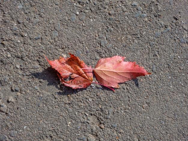 Vista superior de duas folhas vermelhas idênticas na superfície da queda de folhas de asfalto