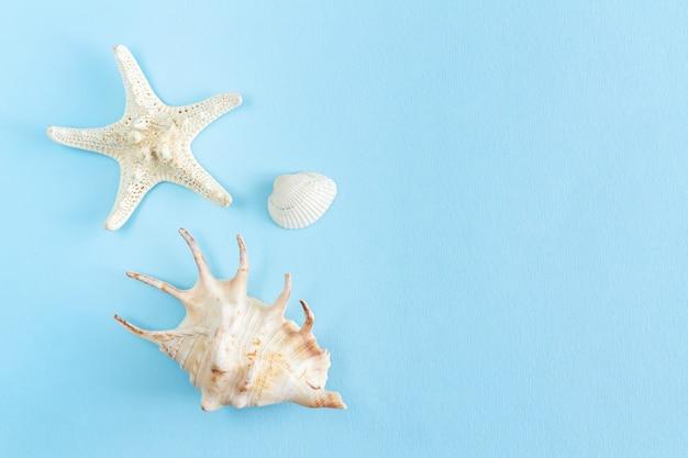 Vista superior de estrelas do mar e conchas do mar com espaço de cópia