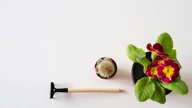 Vista superior de ferramentas de jardinagem e flores