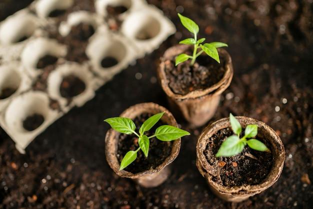 Vista superior de ferramentas de jardinagem e vaso de flores