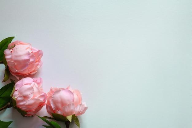 Vista superior de flores artificiais de peônias rosa sobre fundo azul em branco