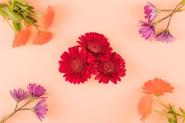Vista superior de flores coloridas