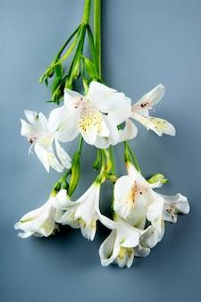Vista superior de flores de alstroemeria cor branca sobre fundo cinza