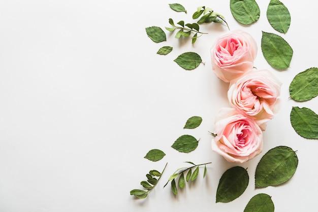 Vista superior, de, flores, e, folhas