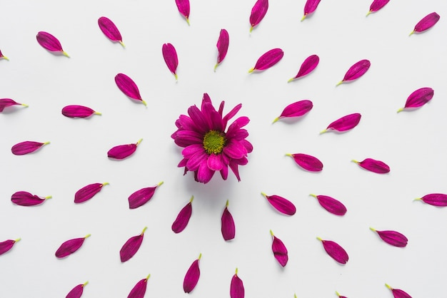 Vista superior, de, flores, e, pétalas