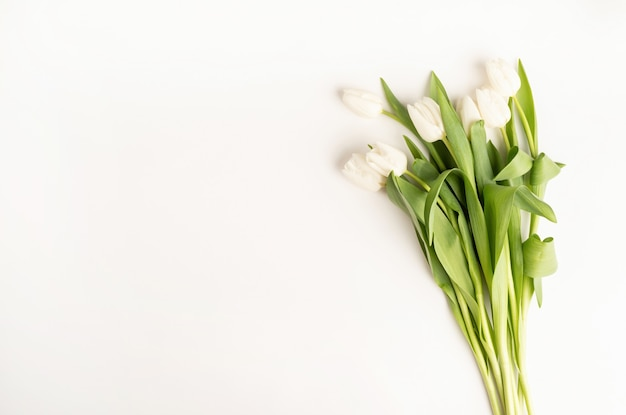 Vista superior de flores em tulipa branca de corte fresco em fundo branco