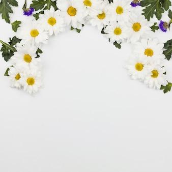 Vista superior de flores frescas