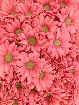Vista superior de flores pastel coloridas