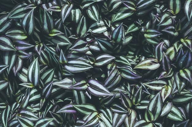 Vista superior, de, folha, planta pequena, em, jardim