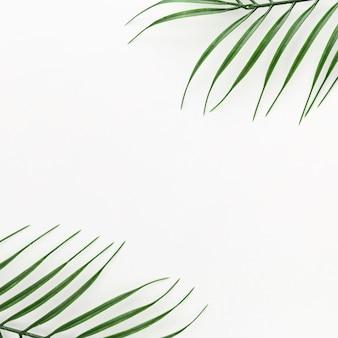 Vista superior de folhas finas de plantas com espaço de cópia