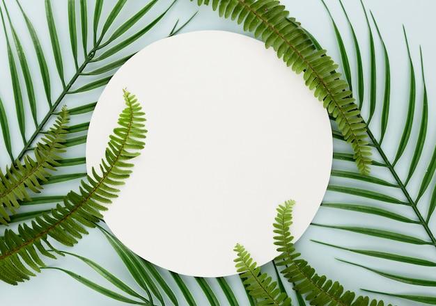 Vista superior de folhas finas e samambaias com espaço de cópia